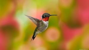bird-birds_449919