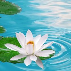 906073510-lotus-zpY-1920x1440-MM-85