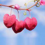 Sevgiyi Hissetmek İçin
