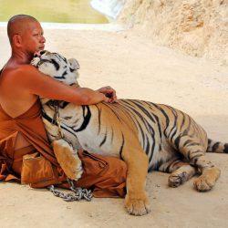 Tiger-temple-kanchanaburi