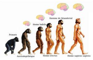 evolution-hominide-prehistoire